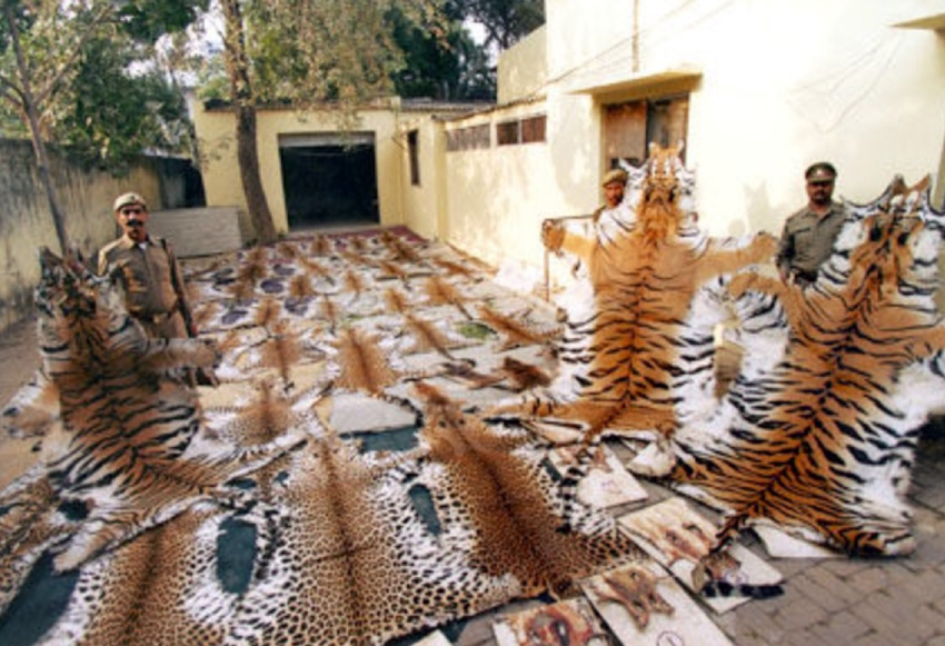 Image of: Killing The Multimillion Dollar Industry That Deals In Endangered Animals Deaths Investvine The Multimillion Dollar Industry That Deals In Endangered Animals