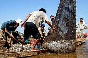 EU to ban fish imports from Cambodia | Investvine